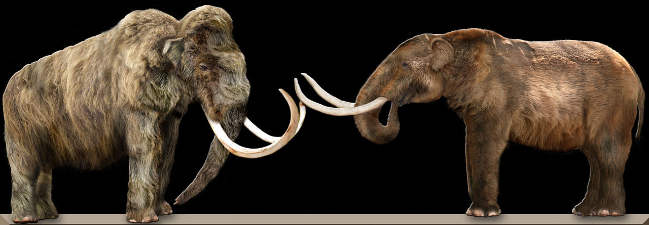 Models of Wooly mammoth and American mastodon.